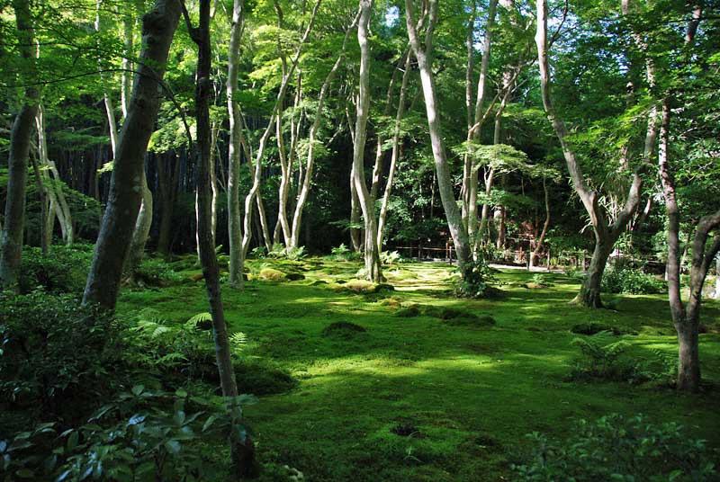 The moss garden of Gio-ji in Sagano, Kyoto, Japan